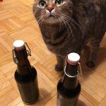 Catcontent und zwei fertig gereifte Flaschen Bier
